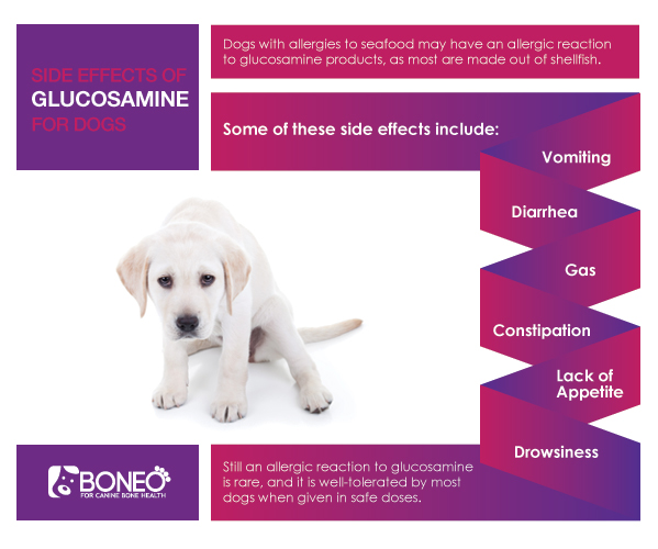 Giving Glucosamine To Dogs