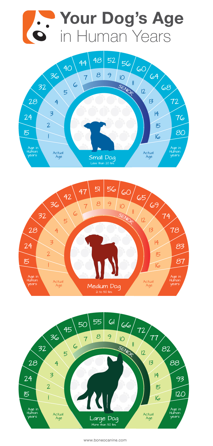 Dog Age Chart, Determine Your Dogs Age