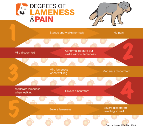Lameness in Dogs