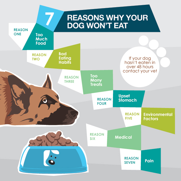 Loss Of Appetite In Dogs 7 Tips To Get Your Dog To Eat