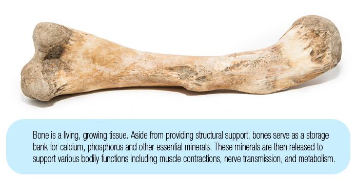 The Bone Remodeling Process In Dogs Made Simple Broken Bone