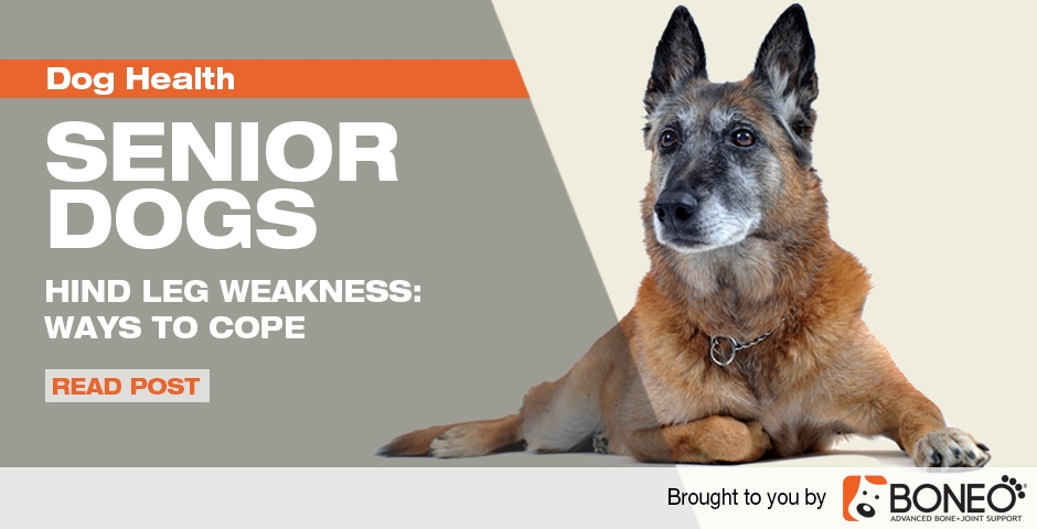 Tips to Cope with Senior Dog Hind Leg Weakness