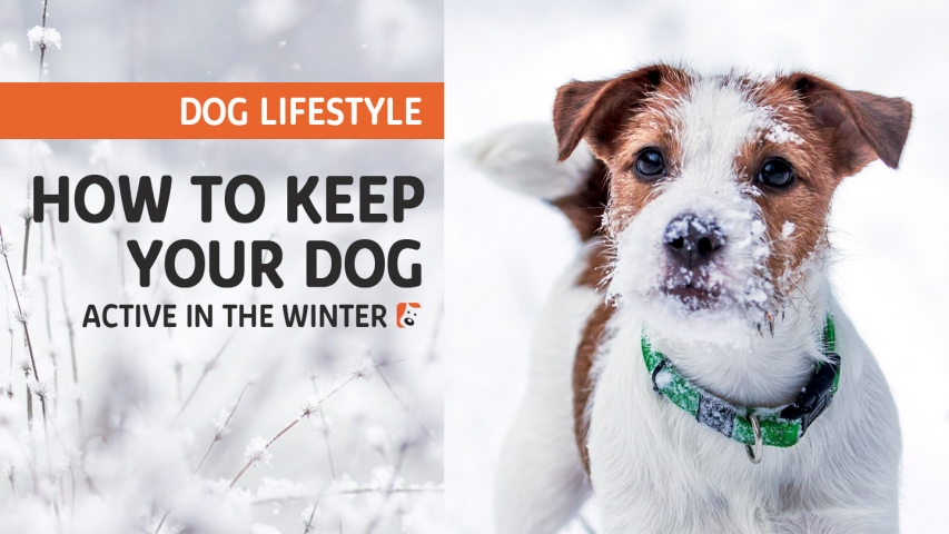 How to Keep Your Dog Active in the Winter